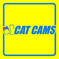 CAT CAMS.com